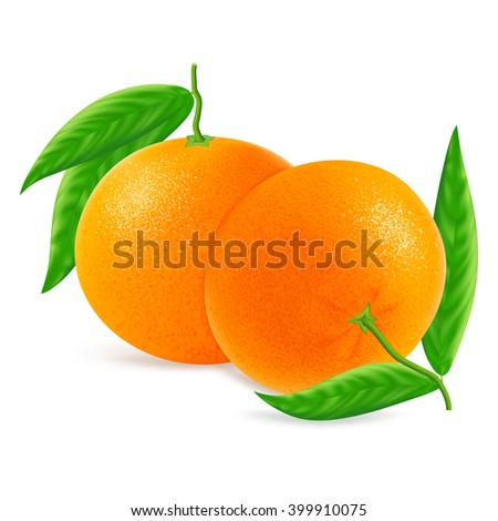 Ripe mandarins or tangerines with leaf isolated on white background. Realistic vector illustration.