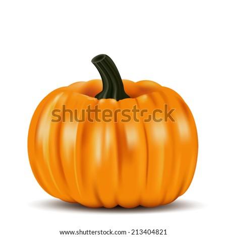 Ripe orange pumpkin vegetable - stock vector