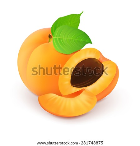 Ripe sliced apricot on a white background.Vector illustration. - stock vector