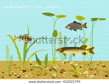 Freshwater fish stock images royalty free images for White river fish market menu