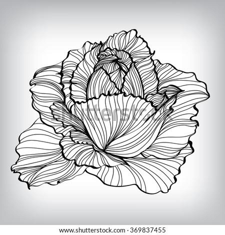 Rose Floral Elements for design, EPS8 Vector background - stock vector