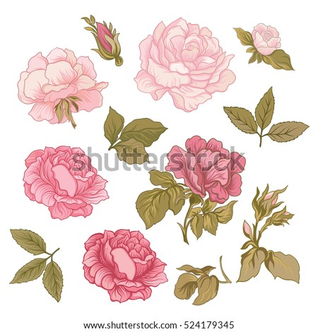 Rose flower set. Vector illustration.