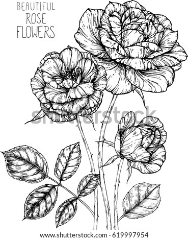 Rose flowers drawing illustration vector clipart stock vector rose flowers drawing illustration vector and clip art mightylinksfo