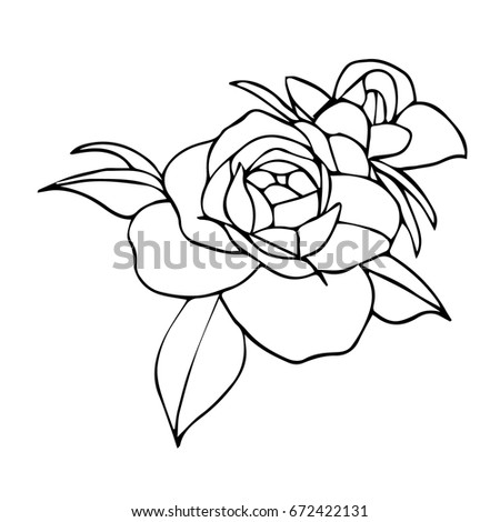 Vector Drawing Rose Line Drawing Stylized Stock Vector 462632776