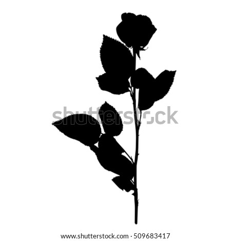 rose silhouette isolated on white stock vector 509683417