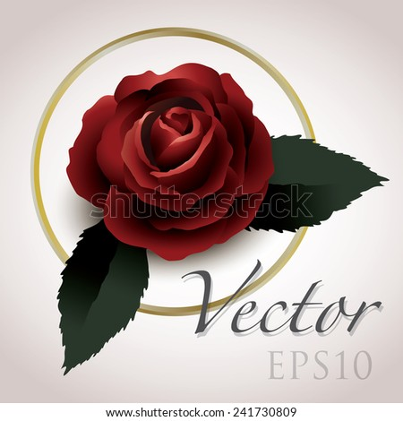 rose vector drawing eps10, vintage style graphic - stock vector