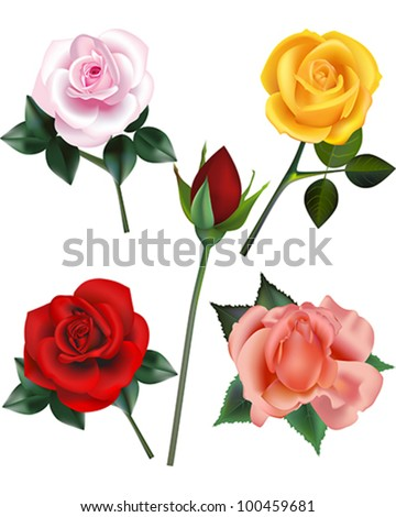 Rose vector illustration collection - A pink rose,  a yellow rose, a red rose bud, a red rose and a peach rose bloom