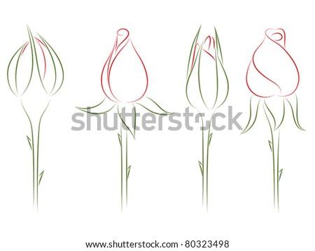 Rosebuds. Vector illustration. - stock vector