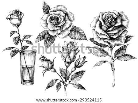 Roses set, floral design elements collection - stock vector
