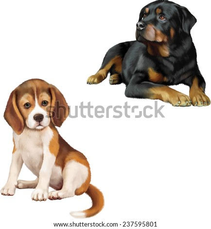 Rottweiler dog, beagle puppy sitting in front of a white background - stock vector
