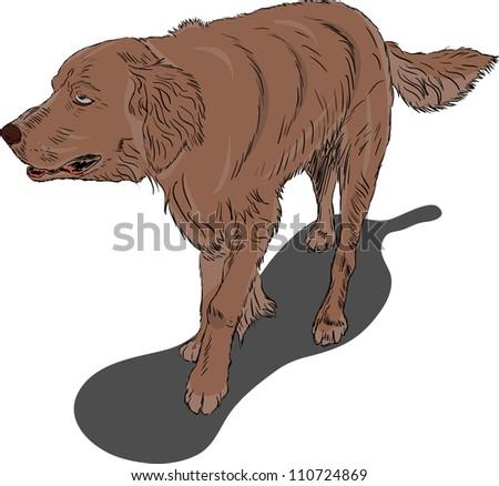 Running dog on white background - stock vector