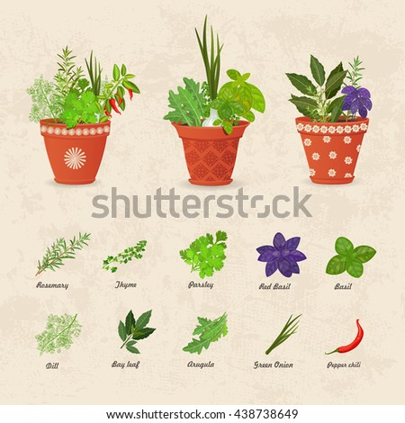 rustic collection of different herbs planted in ceramic pots and fresh herb leaves and spices for your design - stock vector