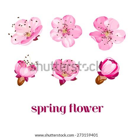 Sakura flowers. Spring background. Vector illustration. - stock vector