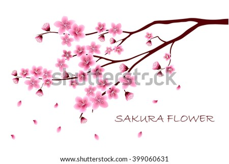 Sakura flowers vector illustration.  invitation cards with a blossom sakura.  Branch of a blossoming cherry tree isolated on a white background.  - stock vector