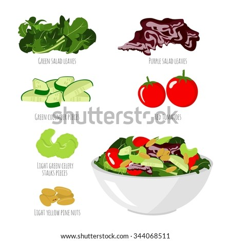 Salad with vegetables on white background - tomatoes, green cucumber, green salad, celery, pine nuts, purple salad - Isolated bowl of salad  - stock vector