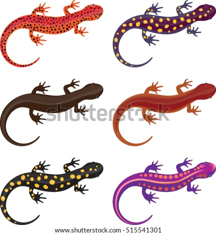salamander clip art set vector illustration stock vector 515541301 rh shutterstock com  salamander cartoon clipart