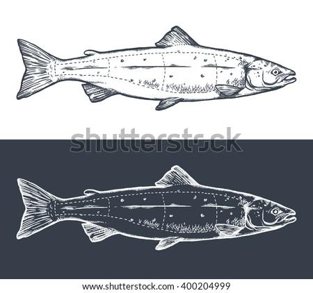Salmon engraving, cutting instruction diagram illustration,on chalkboard - stock vector