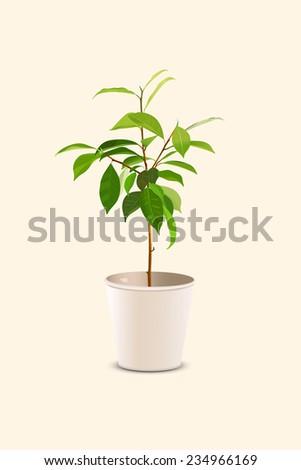 Sapling in Pot - stock vector