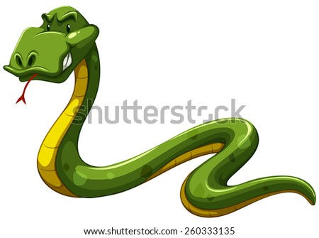 Scary green snake on a white background