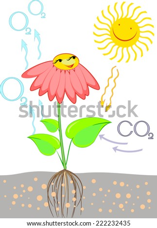 Scheme of photosynthesis in plant - stock vector