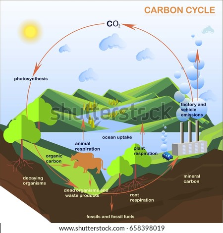 Carbon cycle stock images royalty free images vectors scheme of the carbon cycle flats design stock vector illustration ccuart Choice Image