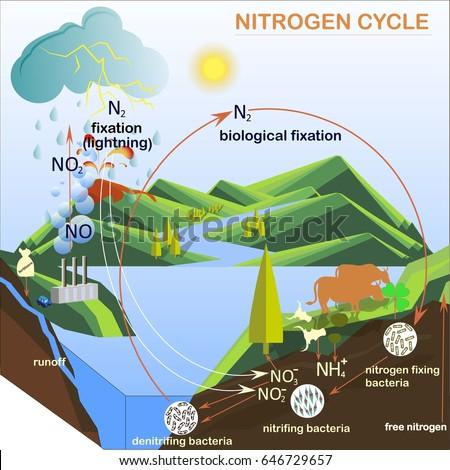 Scheme nitrogen cycle flats design vector stock vector 646729657 scheme of the nitrogen cycle flats design vector illustration ccuart Image collections