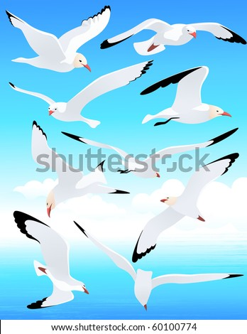 Sea gull set, vector illustration - stock vector