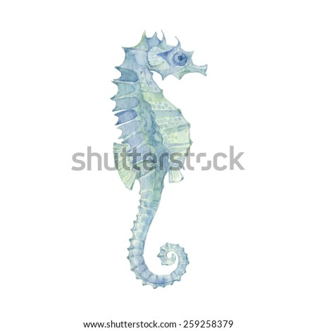 Sea horse isolated on a white background.Vector, watercolor hand drawn  illustration. - stock vector