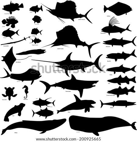 Sea life collection - vector illustration - stock vector
