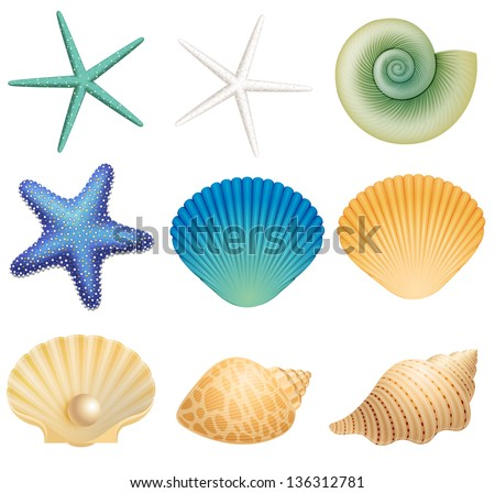 Sea shells and sea star - stock vector