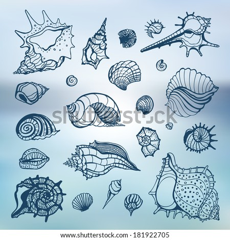 Sea shells collection. Hand drawn vector illustration. Sea background. - stock vector