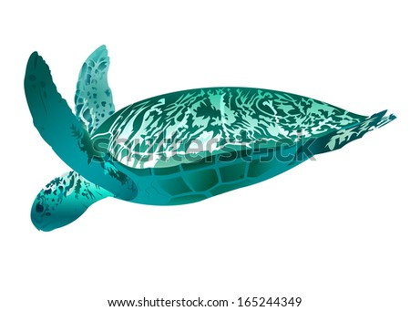Sea Turtle - stock vector