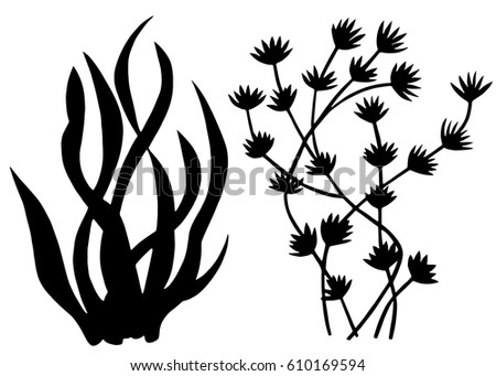 Line Drawing Flower Vector : Sea weed black silhouettes grass leaves stock photo vector