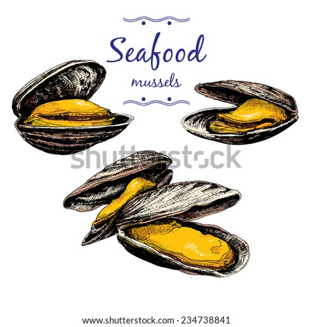 Seafood. Mussels. Set of hand drawn graphic illustrations. - stock vector