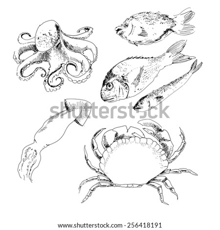 Seafood. Set of hand drawn graphic illustrations