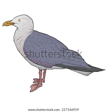 Seagull isolated on white, hand drawn, vector illustration - stock vector