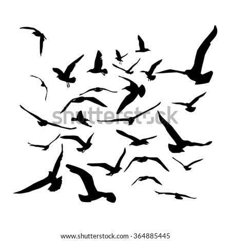 Seagulls black silhouette on white background. Vector - stock vector