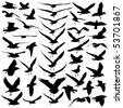 Seagulls Vector - stock vector