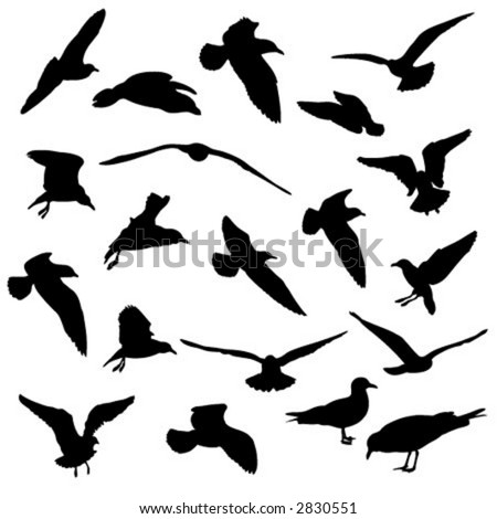 Seagulls vector silhouettes