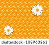 seamless background - honeycomb and flowers of chamomile - vector illustration - stock vector
