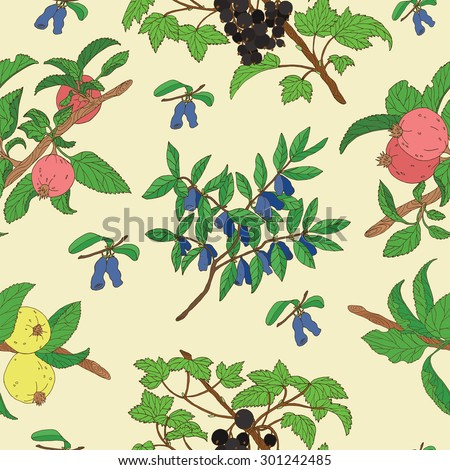 Seamless background with hand drawn colorful apples and berries of black currant and honeysuckle - stock vector