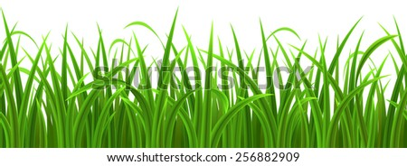 Seamless green grass isolated on white, vector illustration - stock vector