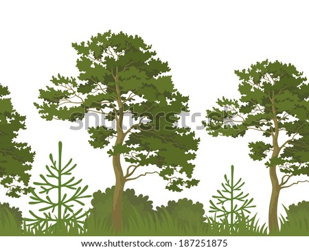 Seamless, green summer forest with pine, fir tree, grass and bush isolated on white background. Vector - stock vector