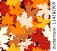 Seamless pattern with autumn maple leaves. Vector illustration. - stock photo