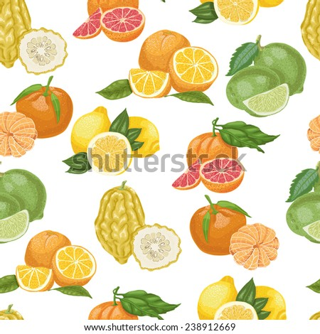 Seamless pattern with citrus fruit on white background.  - stock vector