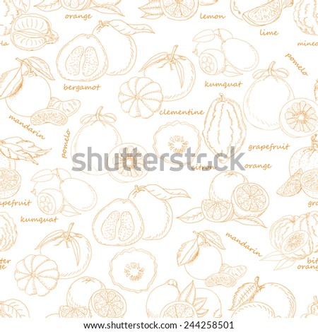 Seamless pattern with citrus fruit on white background. Vector illustration for your design - stock vector