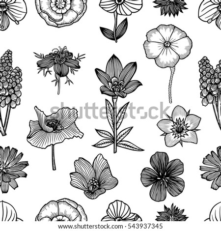 Seamless pattern with pine cones. Hand drawn sketch style vector illustration