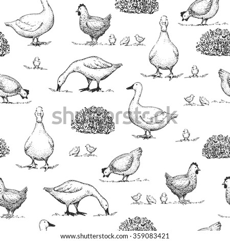 Seamless vector vintage pattern with goose, duck and chicken. Retro hand drawn  illustration. Farm animals. Logotype.