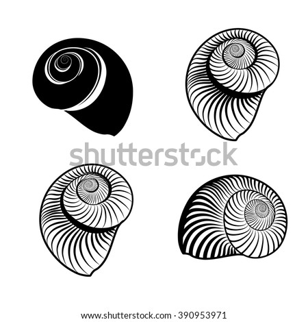 Seashell collection. Sea shell set engraved vector illustration isolated on white background.