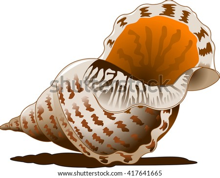 Seashell isolated on white background. Hand drawn doodle sea shell vector illustration